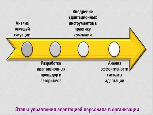 Этапы адаптации персонала в