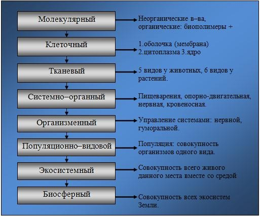 Уровни организации живого.